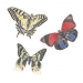 Butterflies Wallies Wallpaper Cutouts