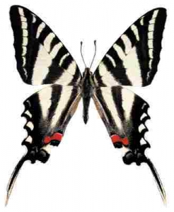 Zebra Swallowtail Whimsical Wings Butterfly
